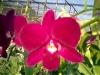 Fresh Cut Flowers Orchid