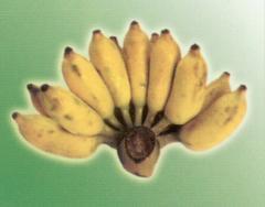 Namva Banana