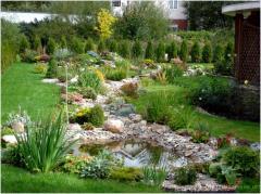 Ornamental Plants for Landscape Design
