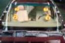 Sika ® Sikaflex -255 Extra (spotted Flex - Ultra X 255).  The windshield