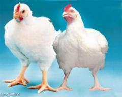 Animal feed for broiler chicken 3-6 weeks up