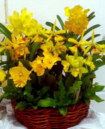 Orchids decorative Code:  BM-O-7