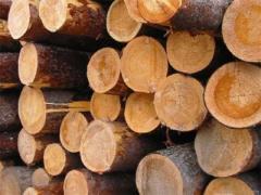 Teak logs - Thailand