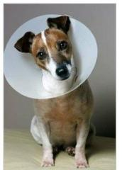 Elizabethan Collar for pet size 7.5 cm to 30 cm