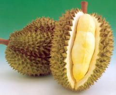 Tropical fruit durian