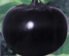 Round eggplant Thai