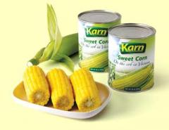 Sweet Corn on the cob in Vacuum Packed