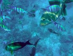 Sea fish, fresh and frozen