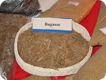 Bagasses