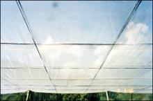 Greenhouse tape
