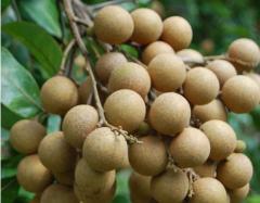 Longan (Seedless)
