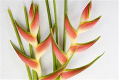Tropical flower Oridle Orange