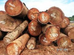 Solid wood Calophyllum LOG