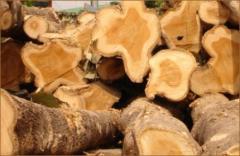 Teak Wood export