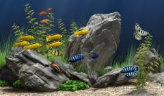 Screen Aquariums