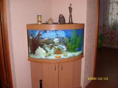 Aquariums angular