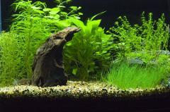 Decor for the Aquarium