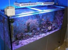 Fluorescent Aquarium Lamp