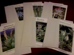Greeting Cards(Packkage of 6)