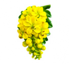 Flower magnets cassia