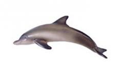 Sea mammal magnets Dolphin