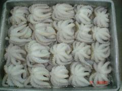 Frozen Baby Octopus