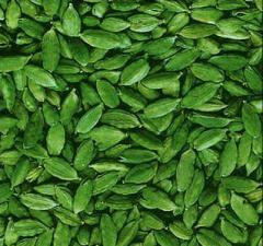 Cardamon (Siam) or Camphor seed