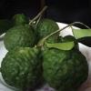 Frozen Kaffir Lime Fruit
