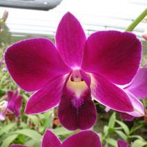 Fresh cut orchid