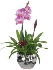 Orchid plants Thai
