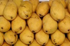Sub-Tropical Fruit mango