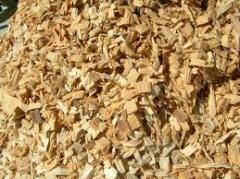 Eucalyptus Wood chip