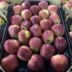 Apples of Gloster, only large quantities of