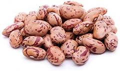 High Quality T Dry Pinto Bean Red and White...