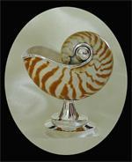 Nautilus Vase nice