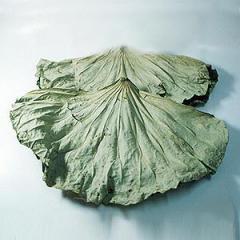 Dried Lotus Leaf