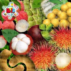 Lychee, Longan, Sweet Tamarind, Rambutan,