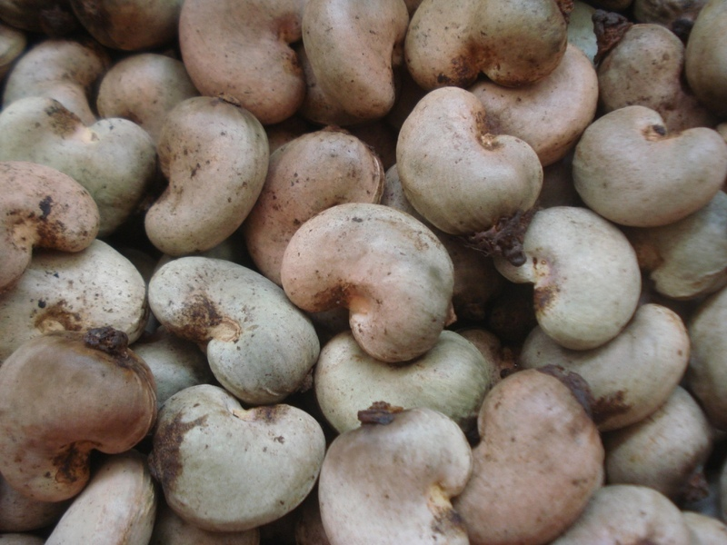 best_price_for_product_cashew_nuts_raw_cashew