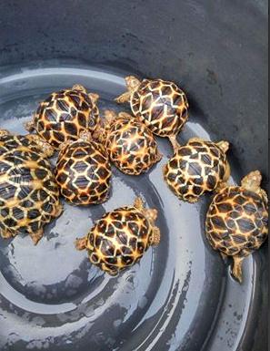 tortoise_of_all_varieties