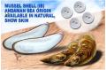 Mussel Shell (Ib)