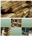 Rubber Wood Production