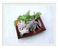 Baby Octopus (Octopus dollfusi)