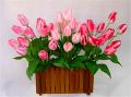 Flower Bush WEB-12