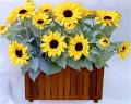 Flower Bush WEB-10