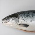 Salmon (Frozen, Fresh)
