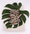 Sun-dried Anchovy