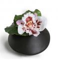 Orchid OP-OC202-A-CL