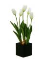 Tulip in Basket