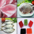 Frozen Live Wholesale Tilapia Fish Fillet Farming