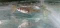 El pez de todos los tipos